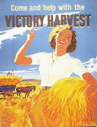 Come and help with the Victory Harvest