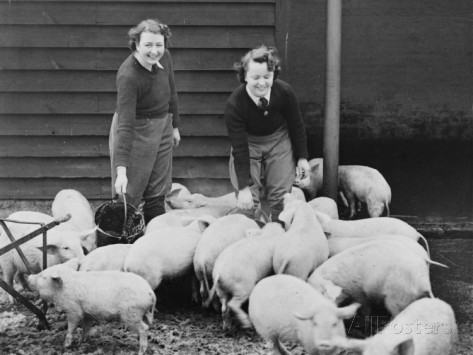 Land Girls working feeding pigs on a farm during World War II (Robert Hunt) Source: All Posters.com