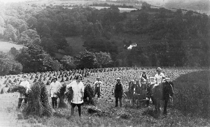 Members of the Women's Land Army harvesting corn at Geli Cadwgan farm, Buith Wells, 1917 © Amgueddfa Cymru - National Museum Wales