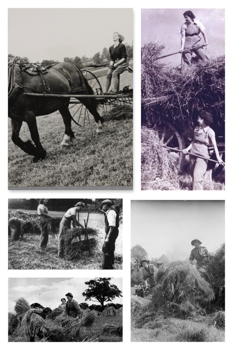 June Haymaking Collage