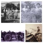 July Activity of the Month: Harvesting