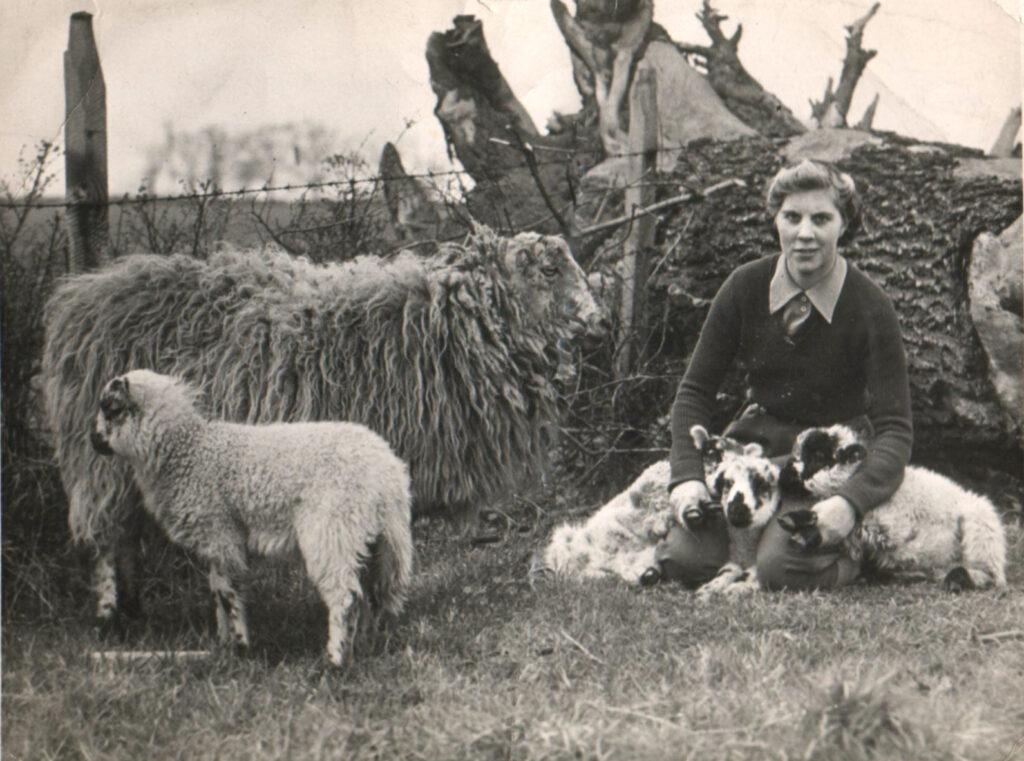 A Bedfordshire Land Girl lambing Source: Courtesy of Stuart Antrobus.