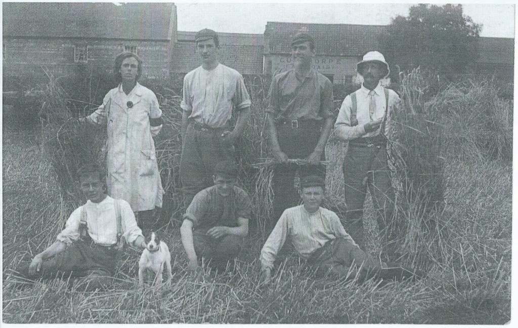 Land girl Ivy Jacklin, with farm men, harvesting at The Grange, Gunthorpe, Peterborough c1917
