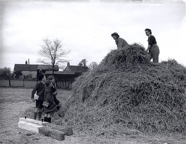 Land Girls haymaking Source: Courtesy of Stuart Antrobus.