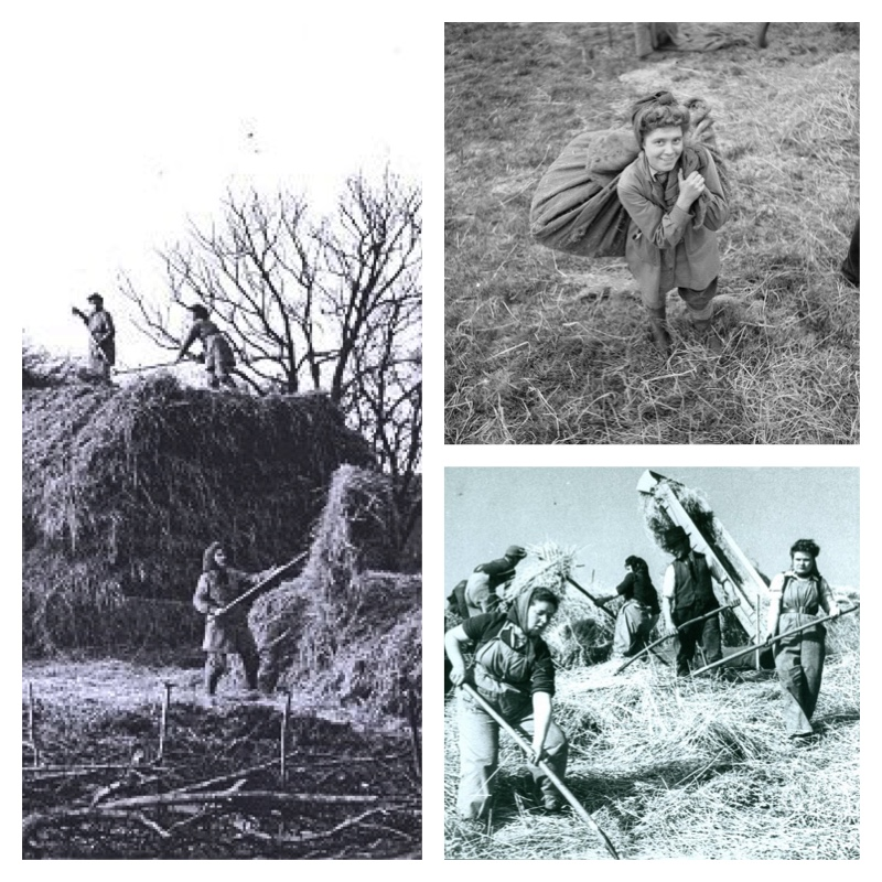 Threshing - August Photo of the Month