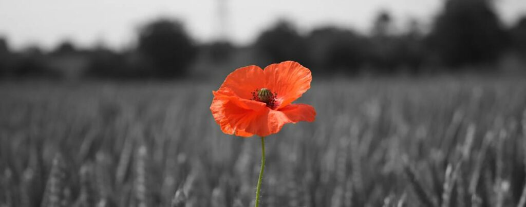 Courtesy of the British Legion: http://www.britishlegion.org.uk/remembrance/how-we-remember/the-story-of-the-poppy/