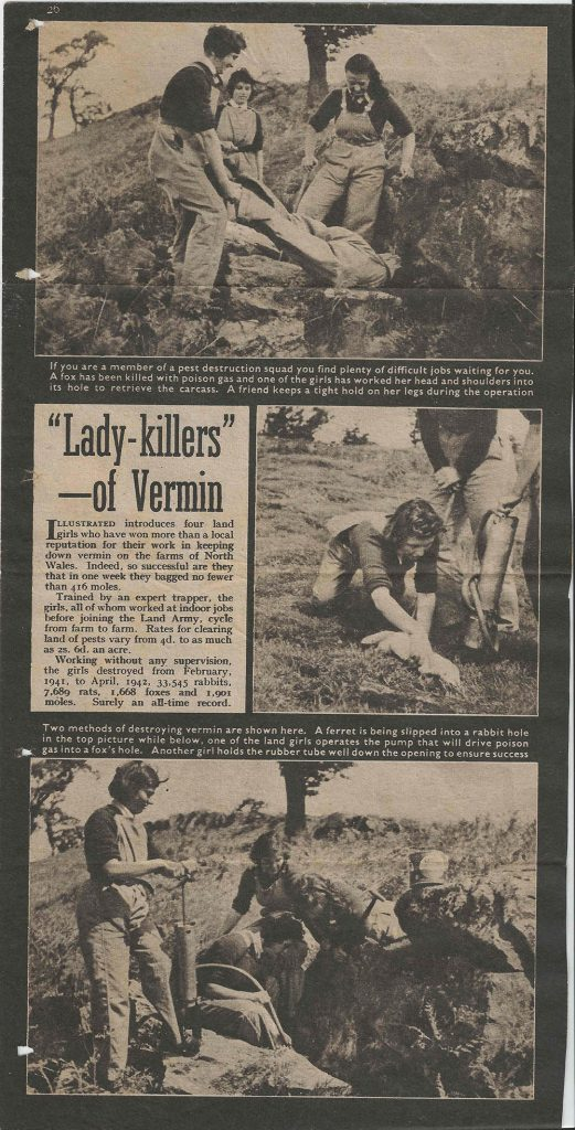 Newspaper article on the 'Lady-Killers' of Vermim