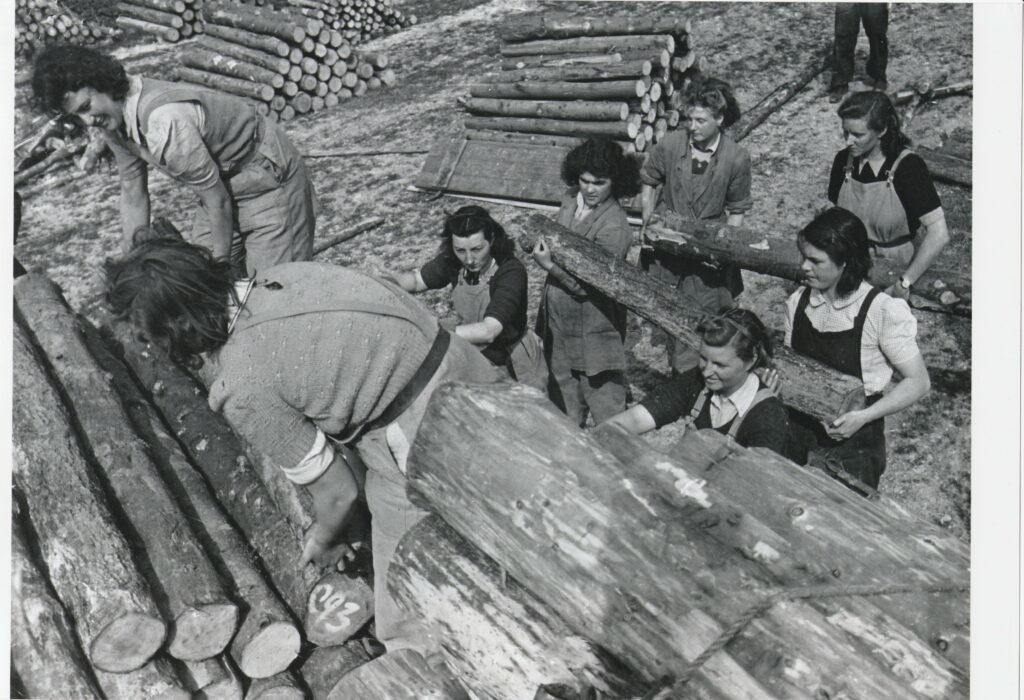 Moving logs. Gladys is in the top left hand corner with 'Aunty Eileen' helping her.  'Aunty Rene' is one of the last pair of log handlers, to the left.