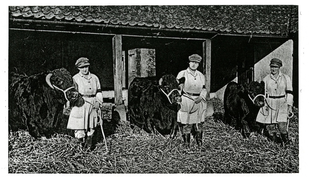 Land Girls on the Sandringham Estate with bulls