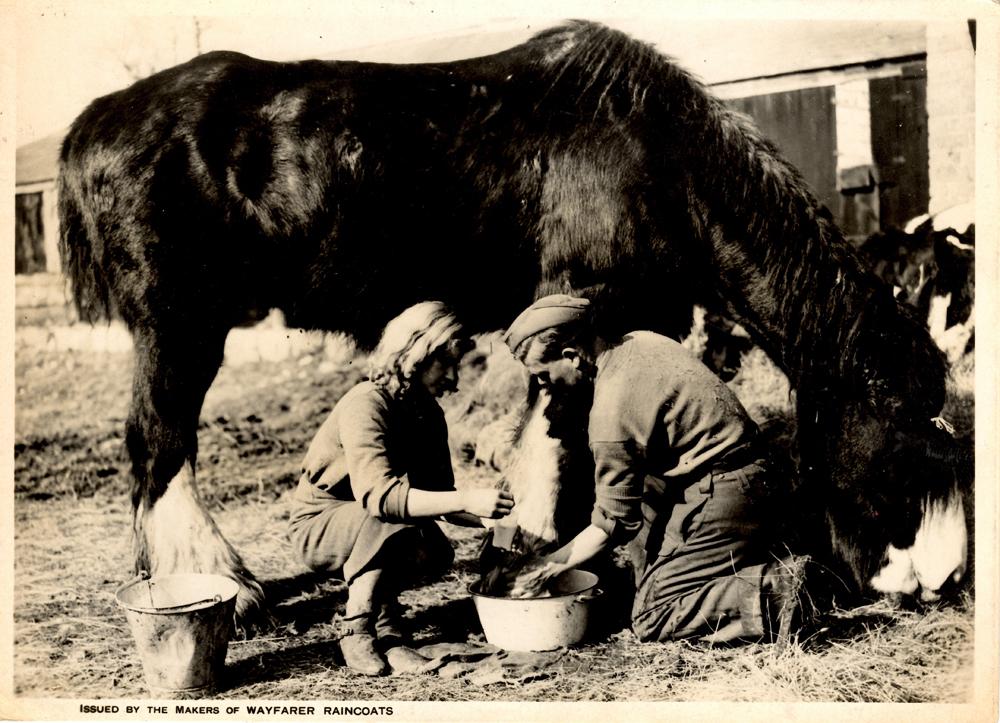 Army First Aid on the farm